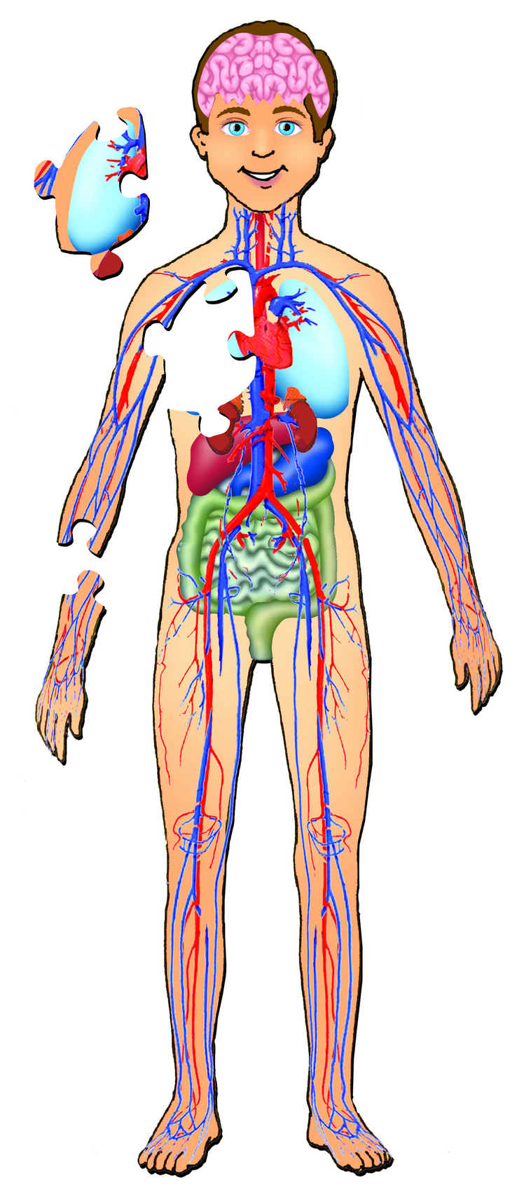 Human Body with OrgansHuman Body Diagram For Kids