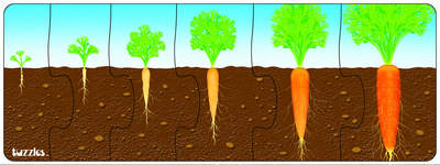 Plant Growth Sequence Set of 2