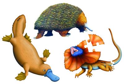 Native Australian Animals Set of 3